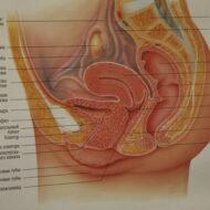 Функция репродуктивной системы Звенигородская 12 клиника АндроМеда_2853